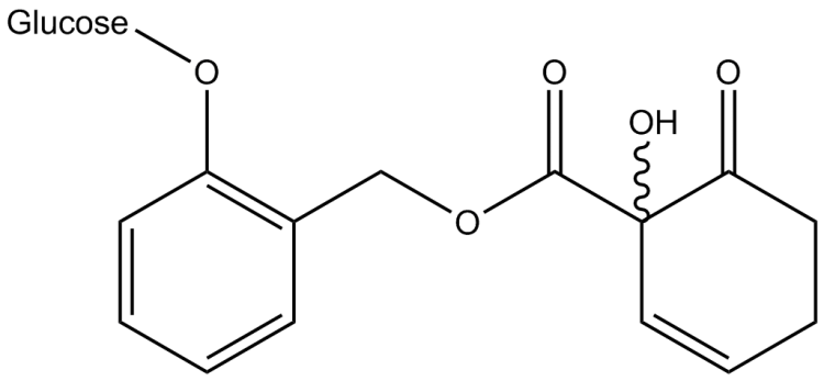 Salicortin, a characteristic salicylic derivative found in Salicaceae.