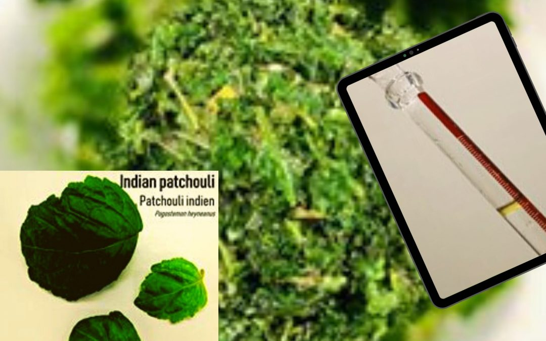 Indian Patchouli : the analysis results