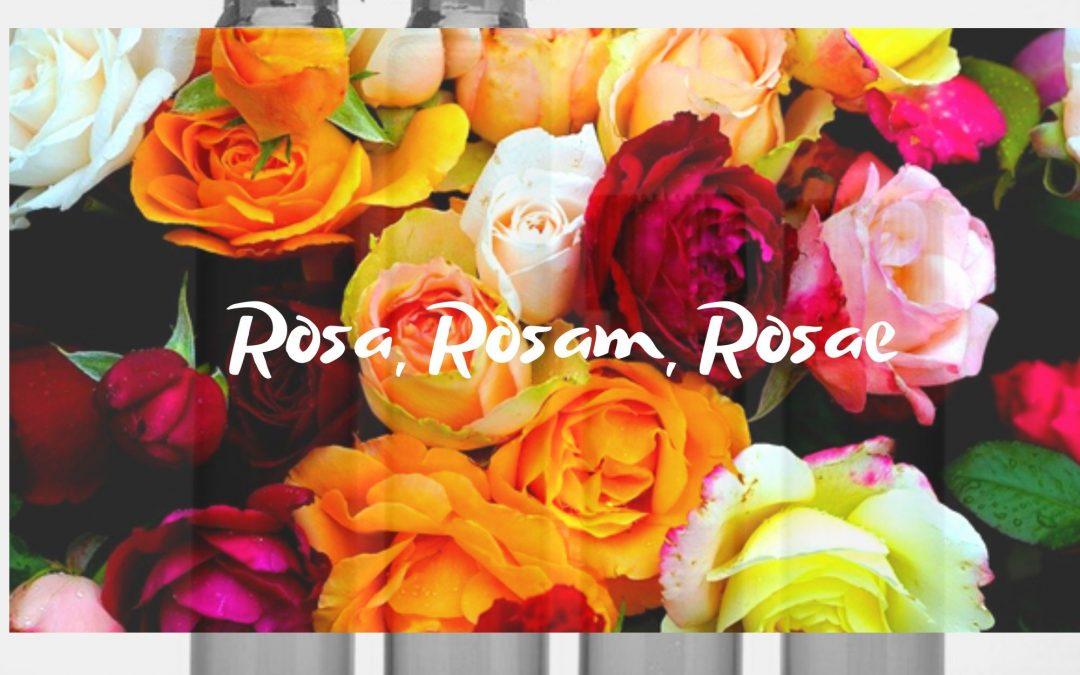 Rosa, rosam, rosae